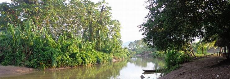 ambiente fiume piccolo foresta bella